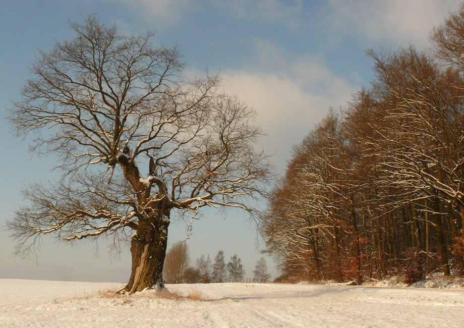 Waltleben-Winter-1